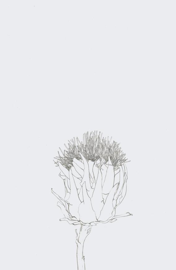 artichaud